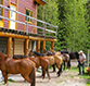 Horseback riding with Bear Corner B & B